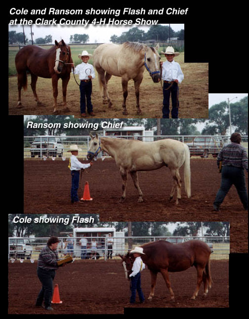 A photo montage: Cole and Ransom showing Flash and Chief at the Clark County 4-H Horse Show; Ransom showing Chief; Cole showing Flash.